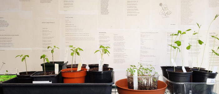 Seedlings and poetry wall