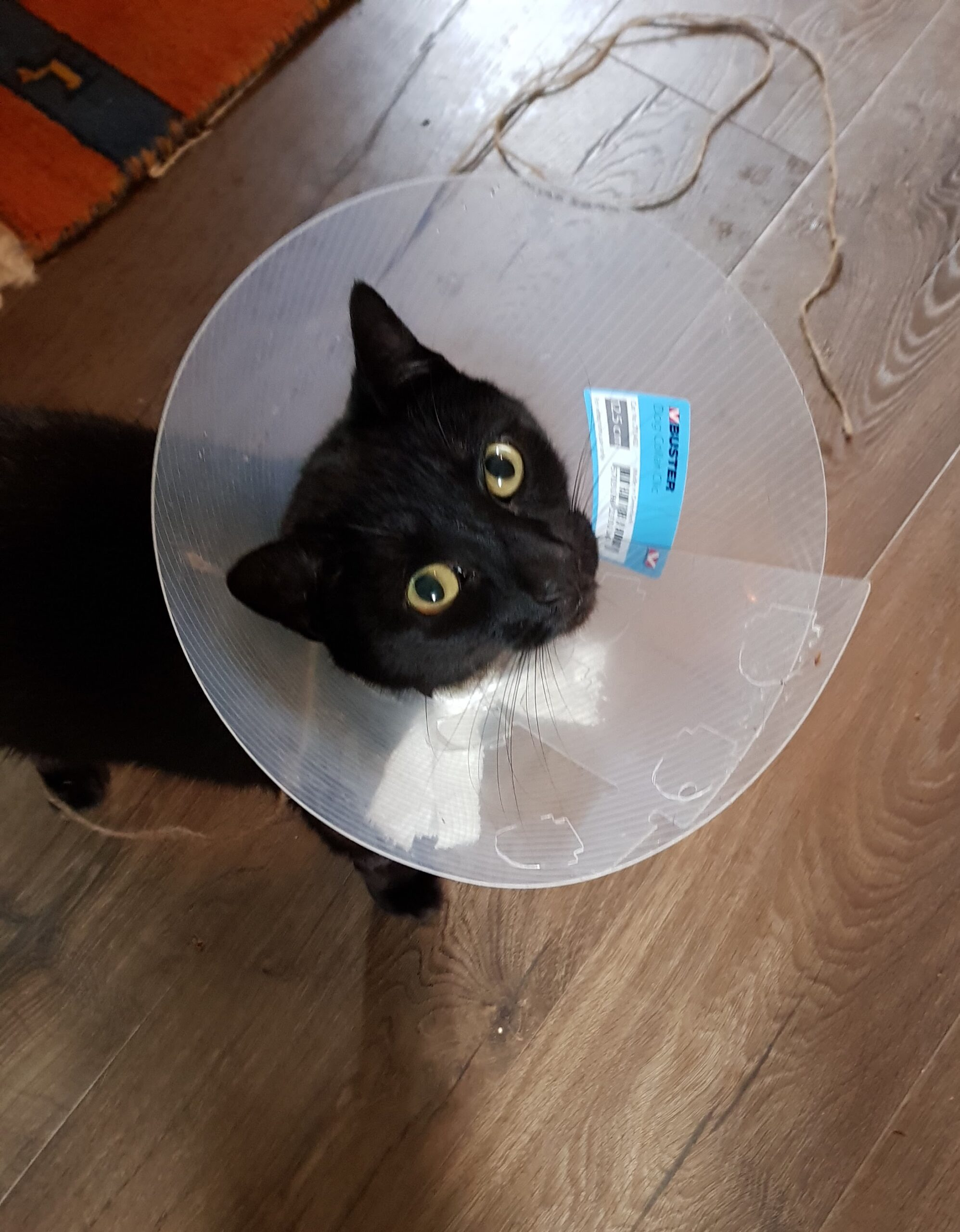 Bobby with cone
